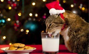 Holiday Safety Tips For Your Cat