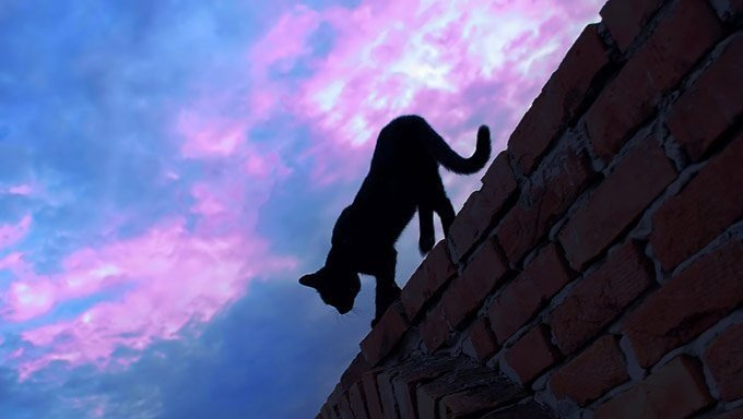 cat walking on wall outside