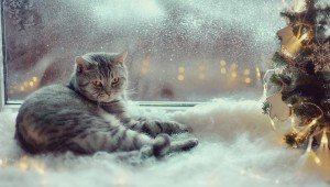 Do Cats Hibernate In The Winter?