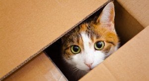 Study Shows That Boxes Reduce Stress And Aid Recovery For Cats