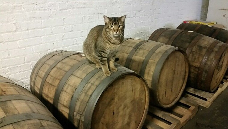A cat sits on top of beer barrels.