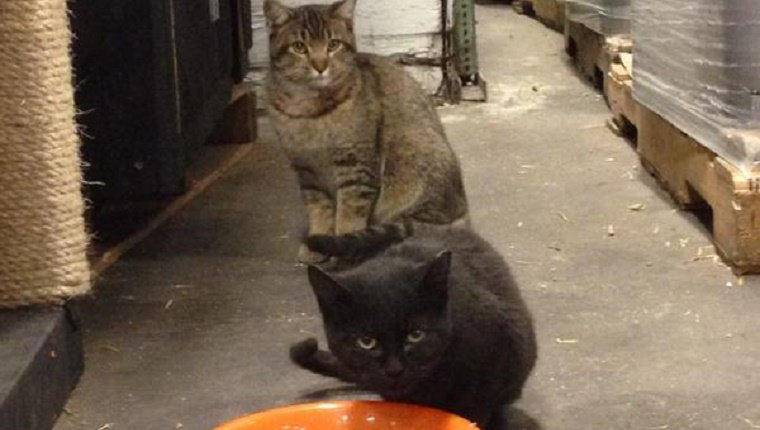 A grey cat and a black cat stand next to each other on the brewery floor. The black cat sniffs at a food bowl.