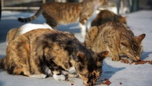 Charges Dismissed Against Feral Cat Caretaker: Cats Will Be Fed