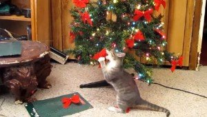 10 Cats That Love Christmas Trees [VIDEOS]