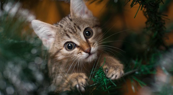 Creative Ways To Cat Proof Your Christmas Tree - CatTime