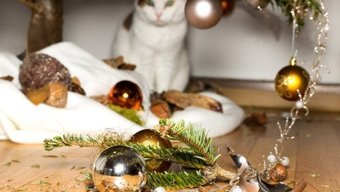 cat standing by broken ornaments