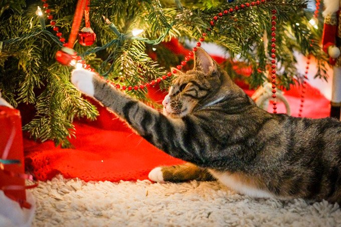 Creative ways to cat proof your christmas tree cattime Christmas tree cat tower