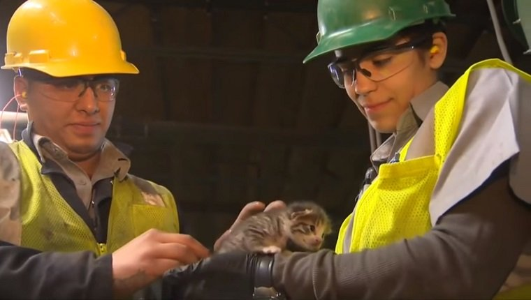 Recycling plant workers hold a tiny, hand-sized kitten.