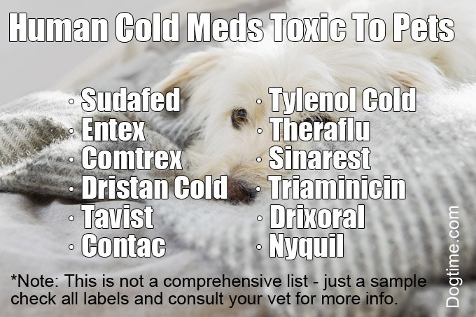 human-meds-toxic-to-pets-2