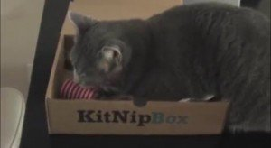 KitNipBox Product Review