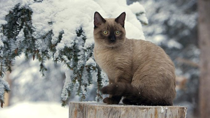 cat on log in snowy winter forest