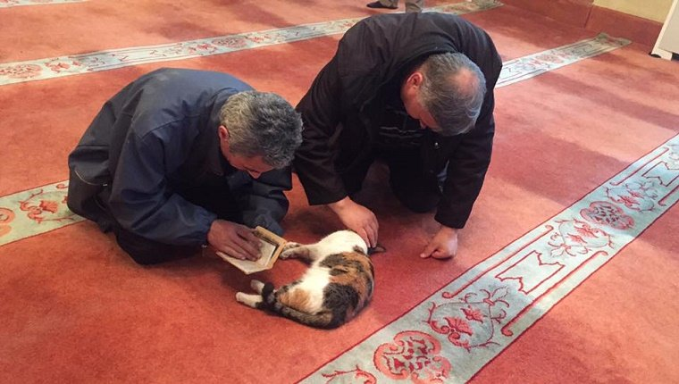 A cat lies on the floor in the mosque while two worshipers pet it and read next to it.