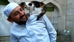 A Mosque In Turkey Welcomes Local Cats To Come Inside