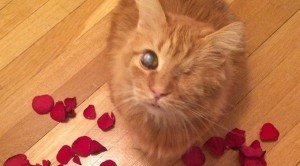 20 Cats Who Want To Be Your Valentine For Valentine's Day