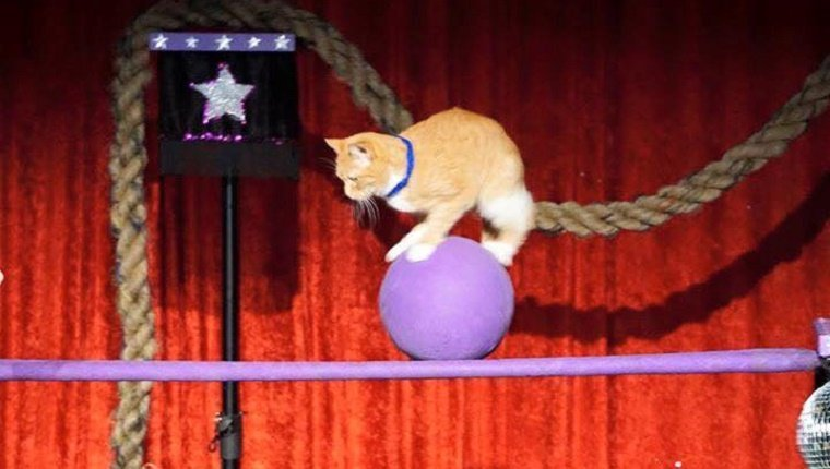 A small orange cat balances on a ball on top of a horizontal beam.