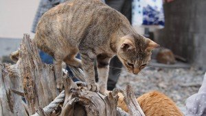 Cats On Japan's Cat Island Saved By Hundreds Of Boxes Of Donated Food