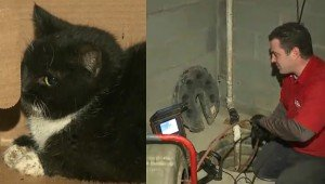 Plumbers Dig Up Basement To Save Family's Cat Trapped In Underground Pipes