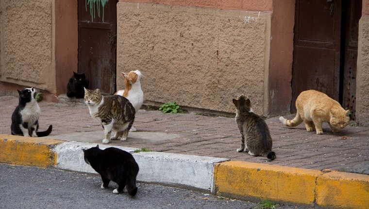 Stray cats sit along a sidewalk.
