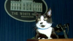 Cat For President: 7 Amazing Cats Who Ran For Political Office