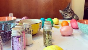 How To Make DIY Cat Toys For Easter [VIDEOS]