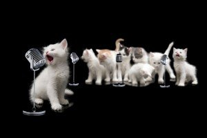 10 Greatest Songs About Cats Ever Written