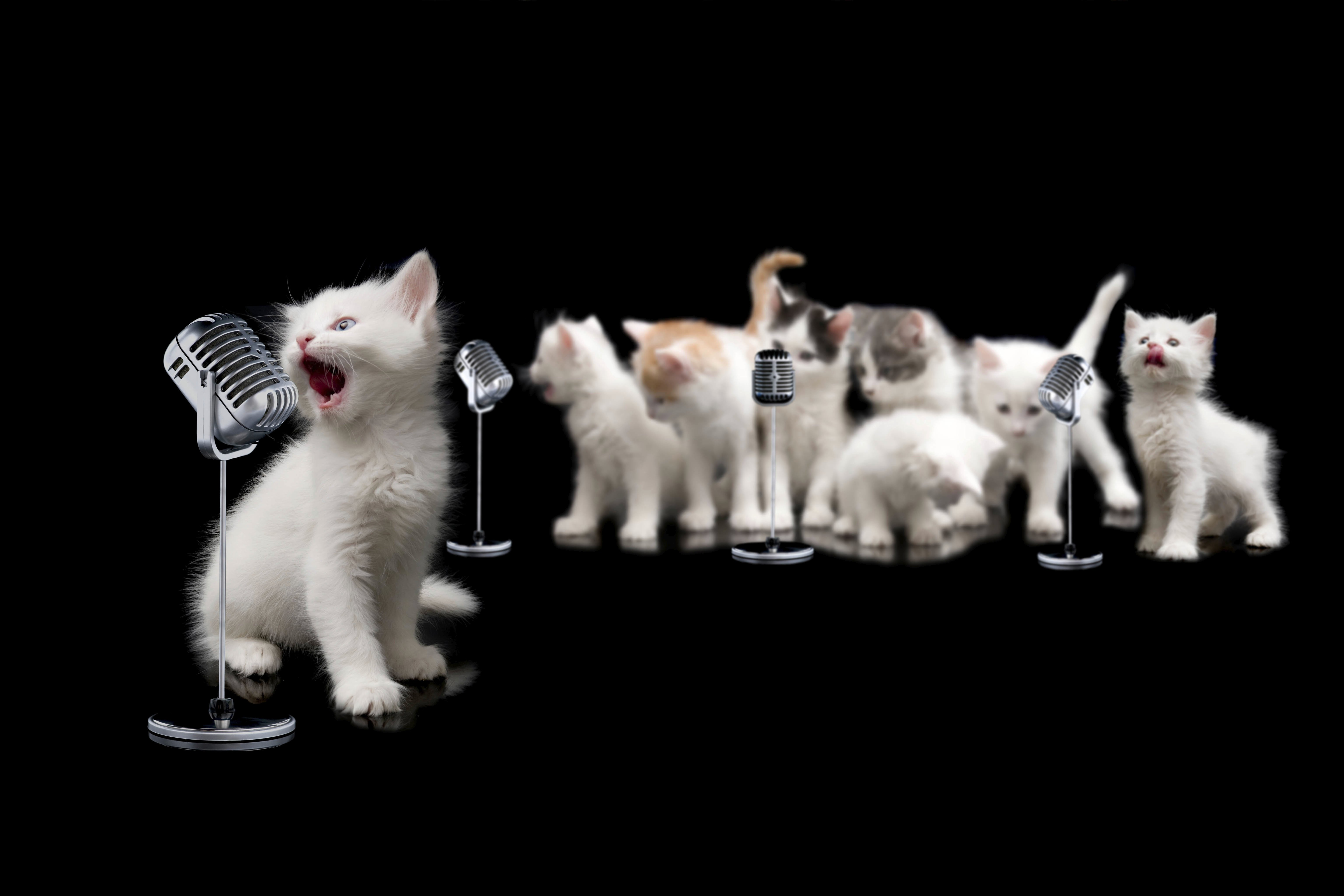 10 greatest songs about cats ever written cattime