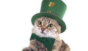 10 Cute Pictures Of Cats For St. Patrick's Day