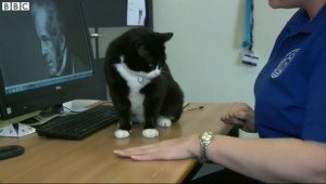 Stray Cat Finds Job As Chief Mouser At British Foreign Affairs Office