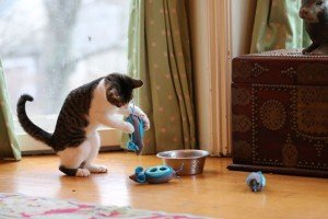 No More Bowls! Food Pods Let Your Cat Hunt For Food
