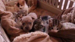Newborn Puppy And His Cat Family [VIDEO]