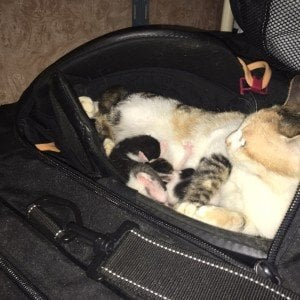 Stray Cat Gives Birth In Hockey Bag [PICTURES]