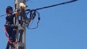 Cat On Electrical Wire Lives Despite Horribly Incompetent Rescue Attempt In Algeria