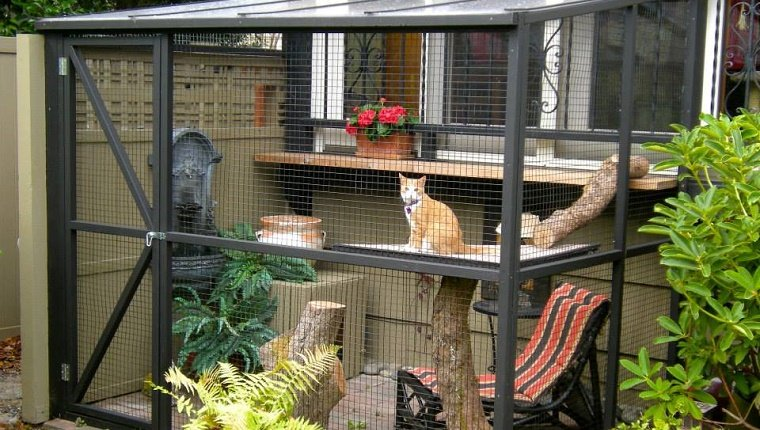 Company Makes Quot Catios Quot Outdoor Patios For Cats Cattime