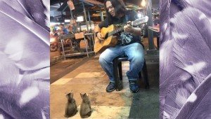 Guitarist Serenades An Audience Of Kittens On The Streets Of Malaysia