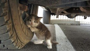 Would You Take Home This Scared Kitten Clinging To The Wheel Of A Truck?