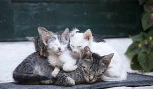 Kitten Season: What To Do If You Find A Kitten Or Kittens