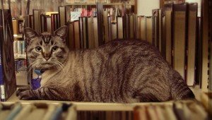 City Council Votes To Remove Browser The Library Cat From The Library