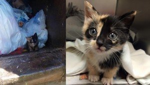 Ridiculously Cute Kitten Saved From Garbage Truck