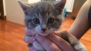 Kitten From The Woods Claims Human Family As Her Own