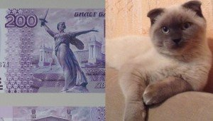 Russian Cat That A City Wanted For Mayor Is Trying To Get His Face Printed On Money