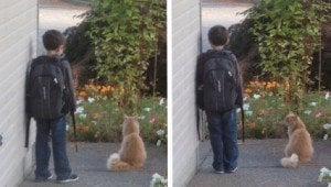 Cat Keeps Boy Company As He Waits For School Bus Every Morning