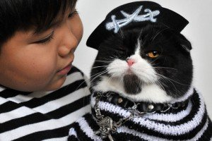 7 Best Ways To Celebrate International Cat Day