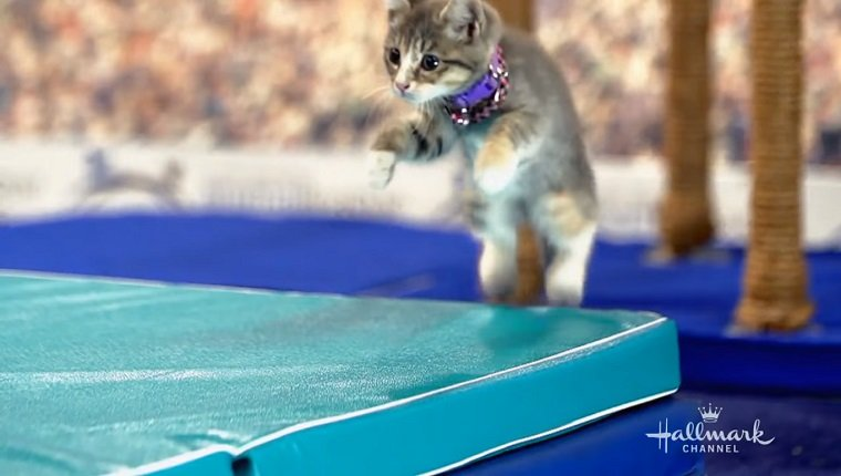 Kitten jumps on a mat