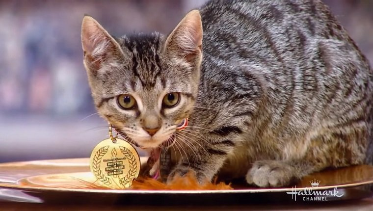 Kitten with a gold medal