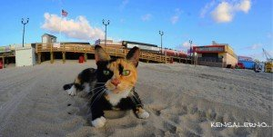 The Cats Of New Jersey's Seaside Heights Are Being Kicked Out And Need Your Help
