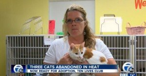 Three Cats Stuffed In Small Crate Without Food Or Water During Heatwave RESCUED!