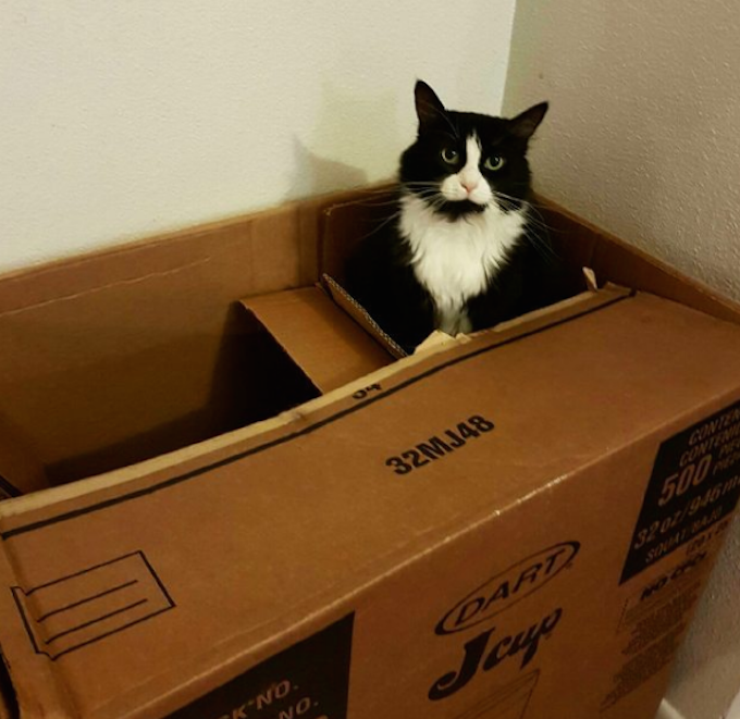 CardboardDartCup  FUNNY: Cardboard Boxes For Cats, Ranked CardboardDartCup