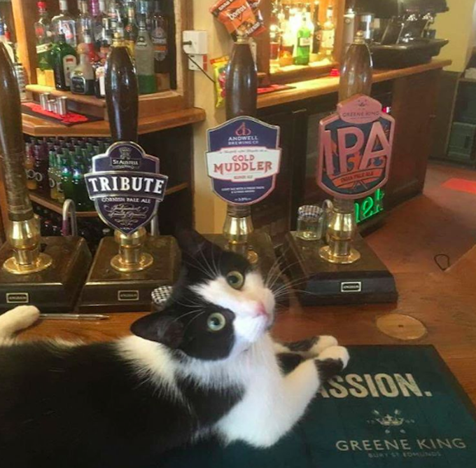Pub-Cat-Labor-Day-Beer