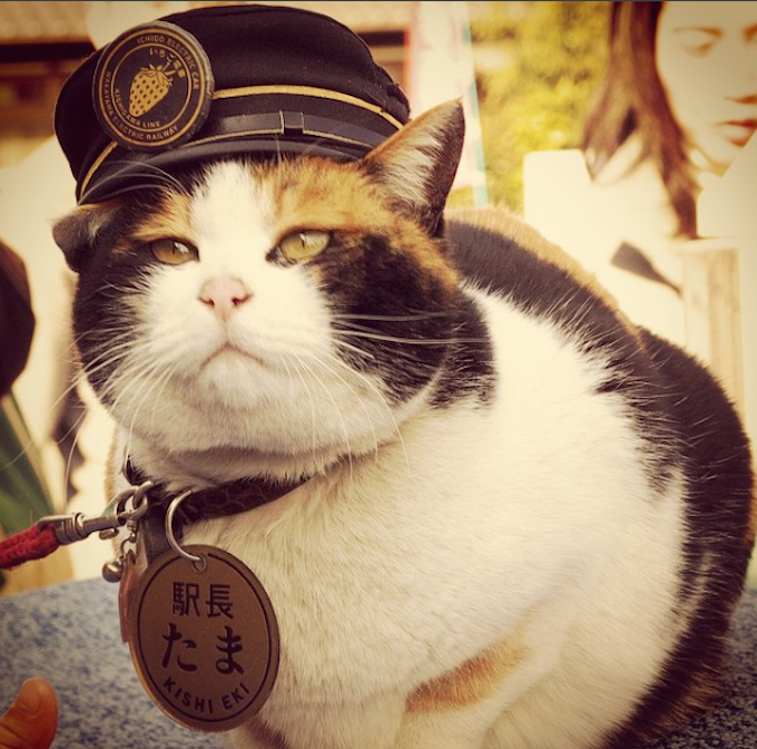 Tama-Stationmaster-Labor-Day-Cat