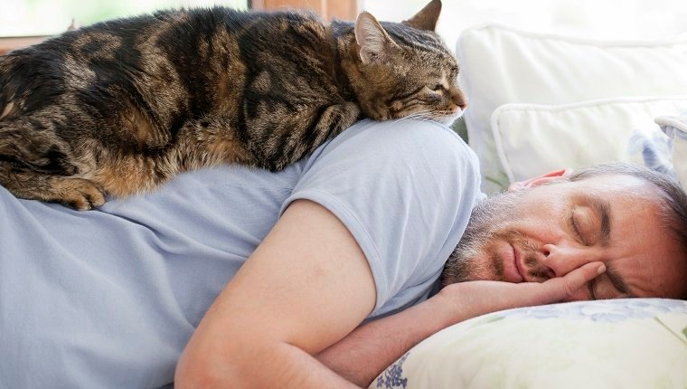 Most Comfortable Couch >> 5 Ways To Show Your Cats Love That They Can Understand - CatTime